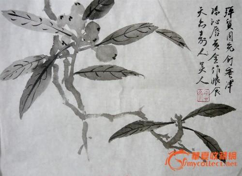 花鸟画 水墨枇杷图