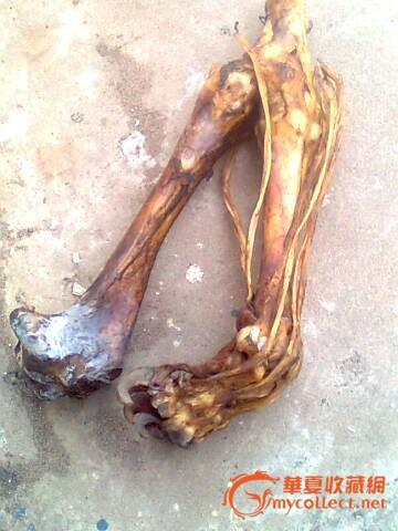 药工收藏孟加拉大型猫科动物爪